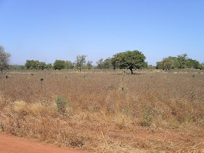 Photo: uprawa bawełny