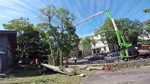 Brookline Mid-century Modern House: Next Generation Demolition thumbnail