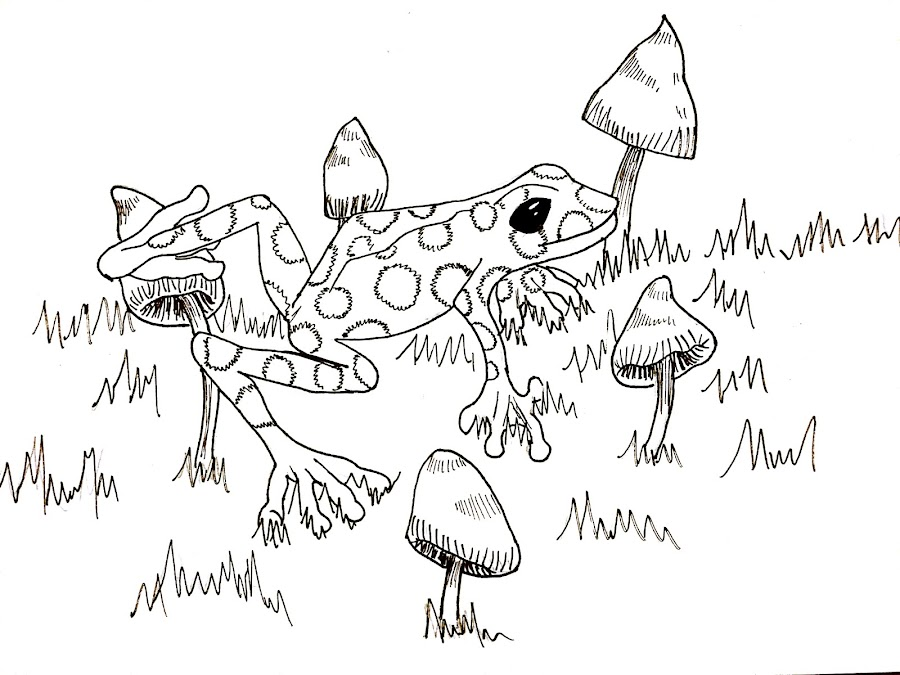 Frog by Melissa Toothman - Drawing All Drawing ( frog, poison, inktober, shroom, mushroom )