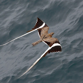 by Patrick Simon - Animals Birds (  )