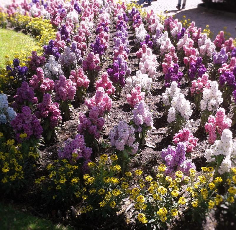 distesa di fiori di giorgia_petruzziello