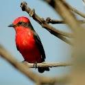 Canary Bird Calls & Ringtones icon