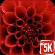Best Red Wallpaper (app)