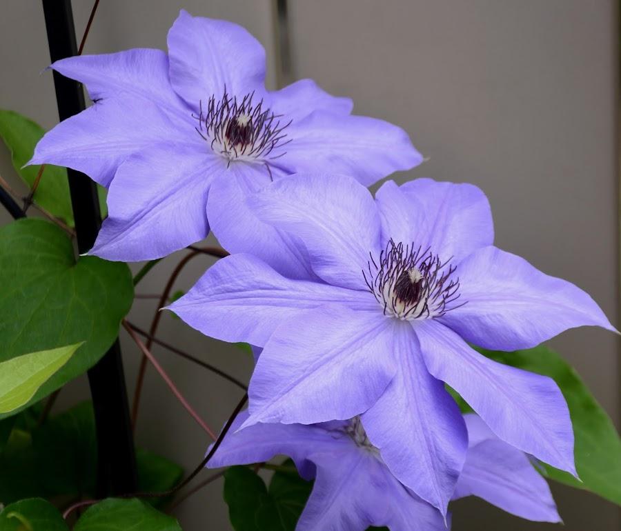 Darlene's Graden by Beth Bowman - Flowers Flower Gardens (  )