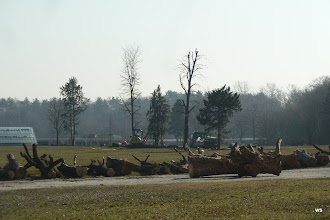 Photo: fasanenhof / künstlerholz + 8 bäume