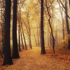Autumn Walk LXXXIII. by Zsolt Zsigmond - Landscapes Forests ( path, foliage, forest, fall, nature, yellow, autumn, trees, landscape )
