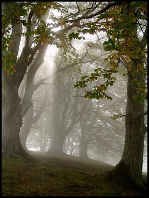 Colori d'autunno - 3 di trentina