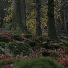 by Morgan Bardon - Landscapes Caves & Formations ( moss, rocks, autumn, wicklow, landscape )