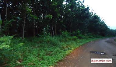Photo: Hutan Jati milik Perhutani
