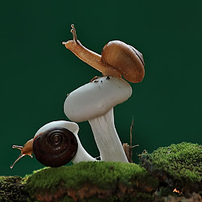 snail by ERFAN AFIAT SENTOSA - Animals Other ( jungle's law )