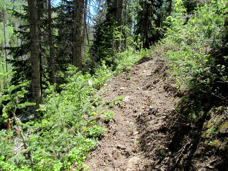 Photo: Uncompacted trail