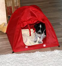 Photo: Erna hat sich eine Höhle gesucht