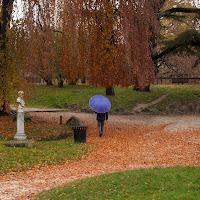 L'ombrello viola di