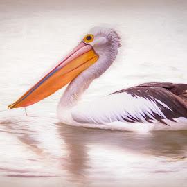 Peaceful Pelican by Carole Pallier  - Digital Art Animals ( painted, bird, pelican, digitalpainting, water, bea )