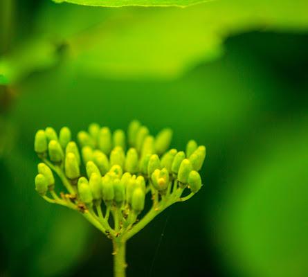 Il mondo del verde di V:V