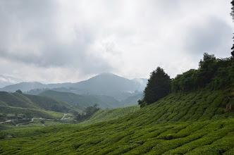 Photo: Tea gardens