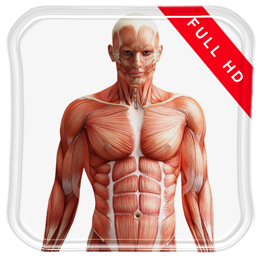Human Anatomy 3D Live Wallpap