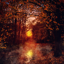 Fairy land by Anita Meis - Landscapes Forests ( fall colors, fall, mysterious, sunset, dark, sun, mist, fog )