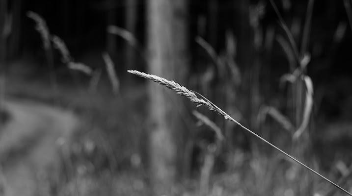 C´é sempre speranza... di Danis_photocorner