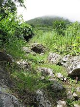 Photo: Het gebied is ooit ontgonnen tot boomgaardgebied en is nu - zoals op veel plaatsen op Saba door het oerwoud min of meer heroverd en heet dan tweede generatie oerwoud
