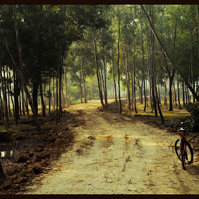 DAY TIME IN FOREST by Abinash Patra - Landscapes Forests ( forests, cycle, tree, backgrounds, travel )