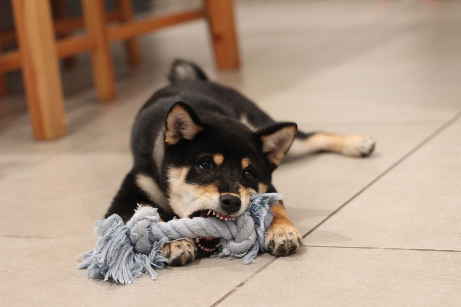 When Should You Initiate a Dog Bite Lawsuit?