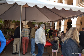 Photo: All show plants under tent