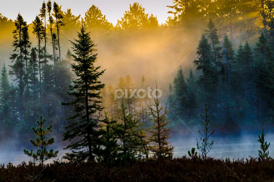 Bog Fog Lights Up by Christopher Burnett - Landscapes Forests ( fog, shafts of light, sunrise, bog, pwcsunbeams )