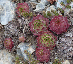 Photo: ...and succulents!