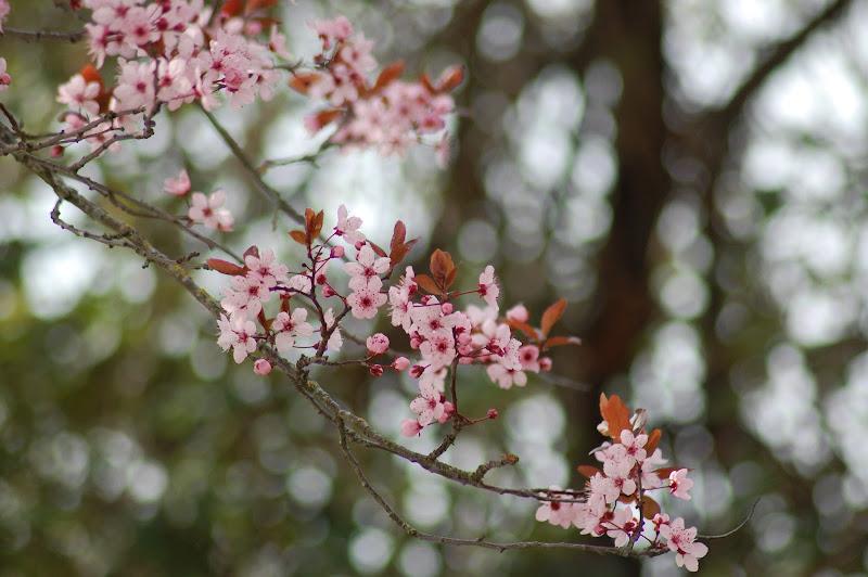 spuntano i fiori... di Attilio_07