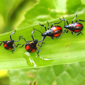 Hayu Kita  Ngabuburit by Dedi Sukardi - Animals Insects & Spiders