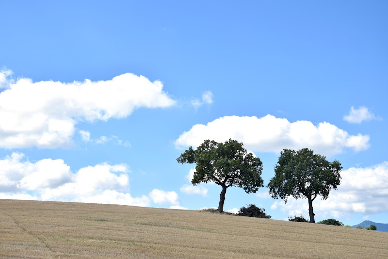 alberi fratelli di s_ornella