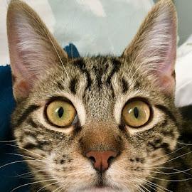 Bright-eyed Kitty by Lori Fix - Animals - Cats Portraits
