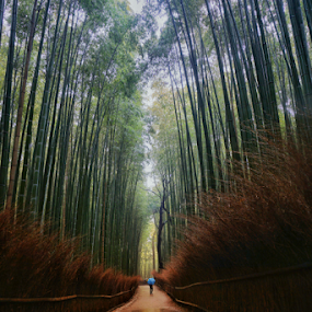 by Wah Yuen Lau - Landscapes Forests ( bamboo forest, reflection, nature )