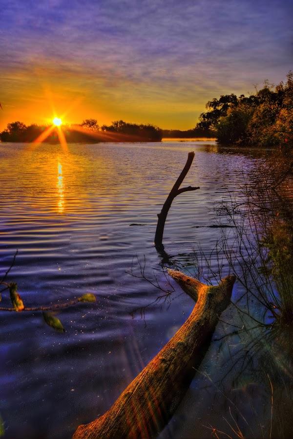 Floating Like a Log by DE Grabenstein - Landscapes Sunsets & Sunrises