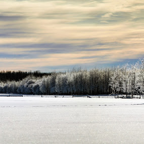 Northern Alberta by Jacob Hoedl - Landscapes Prairies, Meadows & Fields ( dynamic, fence, winter, cold, canada, frost, tracks, landscape )