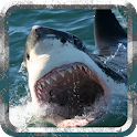 Angry Shark - Wild Attack icon