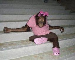 pony-orangutan-082312.jpg