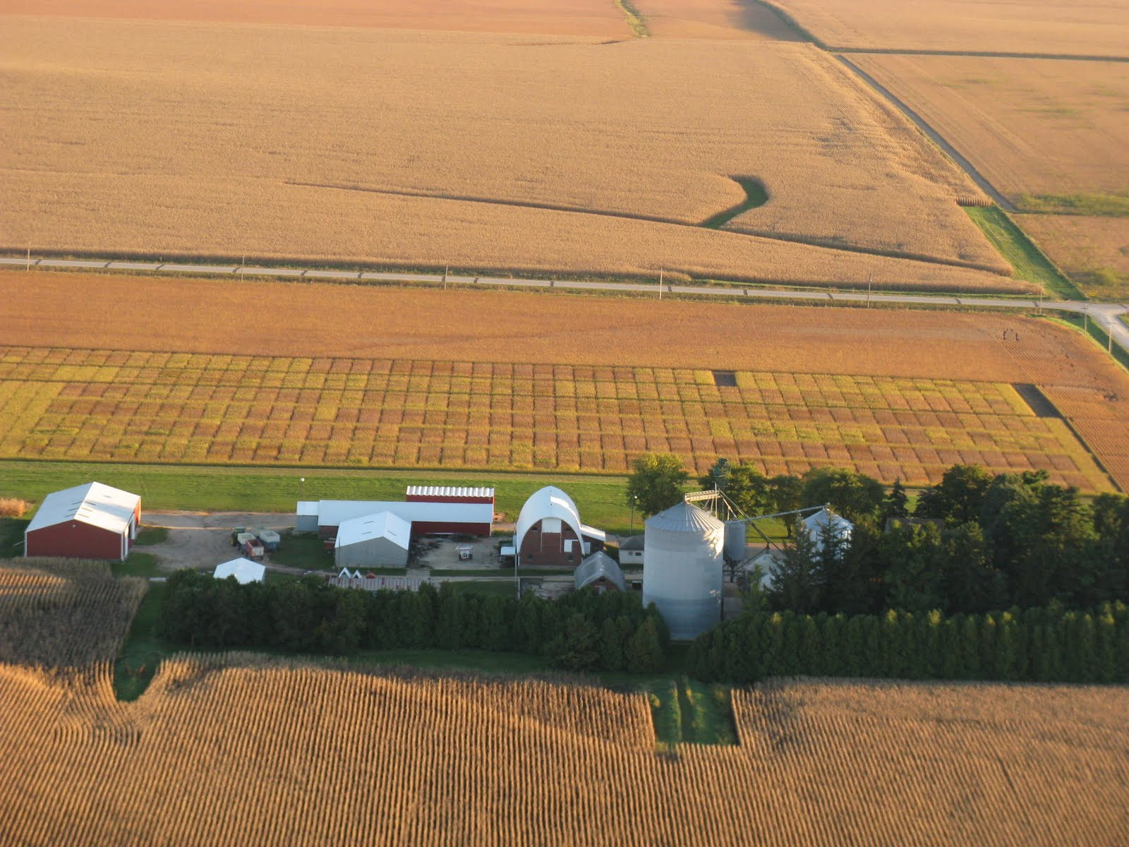 Photo: Golden quilt of soybean test plots at Isley farm west of Cedar Falls