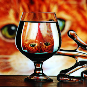 deep watch by Mervin Anto - Animals - Cats Portraits ( orange, reflection, cat, tabletop, wine cup )
