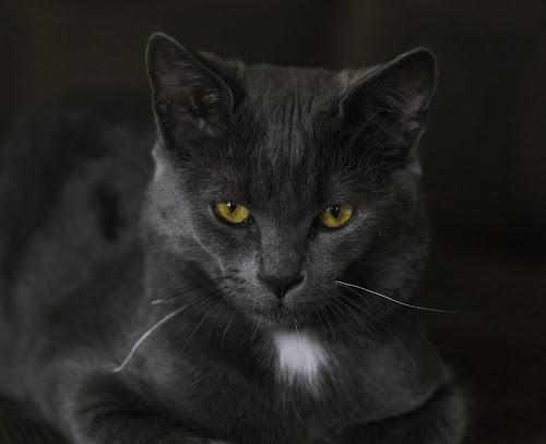 Rooney by Benny Høynes - Animals - Cats Portraits ( canon, cat, portrait, norway, animal,  )