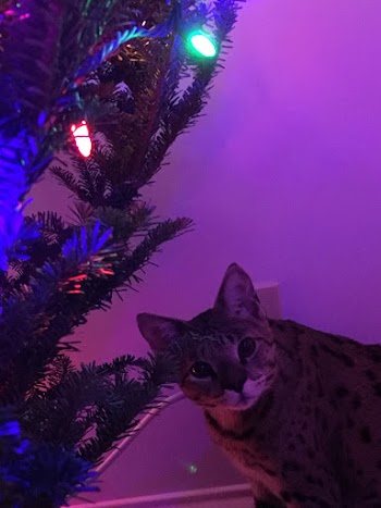 Sunny with the Christmas tree