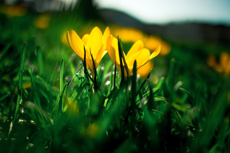 Spring di Tudor Craciun