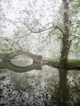 Photo: Bridge and tree reflected in a misty pond at Eastwood Park in Dayton, Ohio.