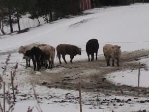 Photo: Joudun perumaan puheitani - ruskeaakin lunta on olemassa!! Älä kuitenkaan syö keltaista tai ruskeaa lunta ;))