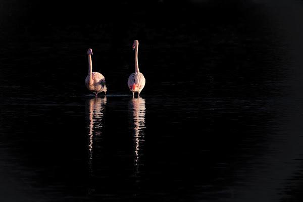 Fenicotteri all'alba di Peter_Sossi