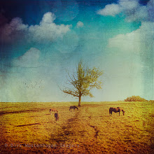 Photo: #landscape #textureblendphotography #vintagestyle #peaceful  Prints: http://society6.com/DirkWuestenhagenImagery/Lone-Tree-with-Horses_Print#1=45