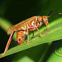 Wasp-Mimic Katydid - Female