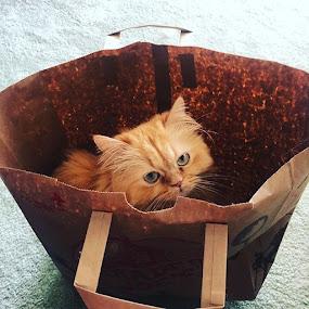 Fresh cat from Trader Joe's by Scott Murphy - Animals - Cats Playing