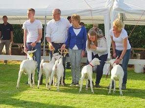 Photo: Klasse 1: witte lammeren geboren in april 2016. 1a. Hilda; 1b. Romy; 1c. Rosa; 1d. Arantxa vd Voordijk; 1e. Greetje.